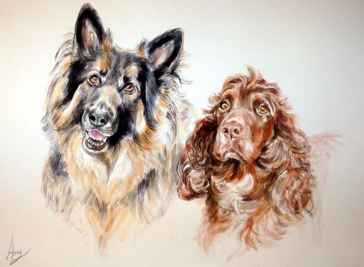 'Alsatian & Spaniel' - Watercolour